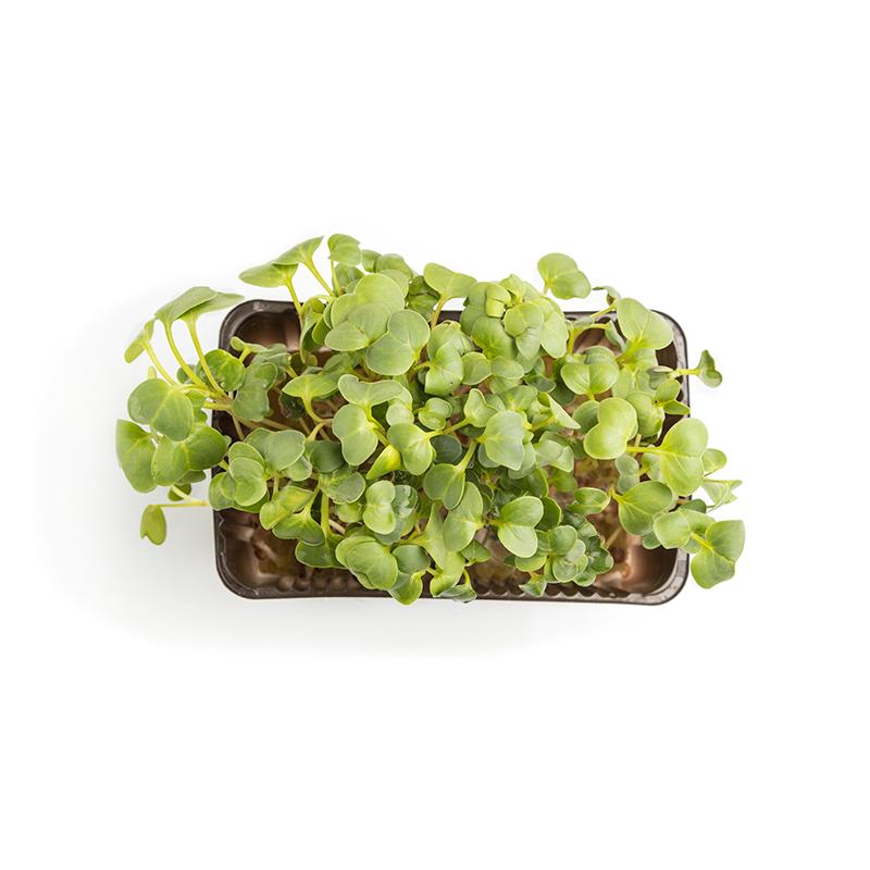 Planta preparada para tu huerto ecológico en casa
